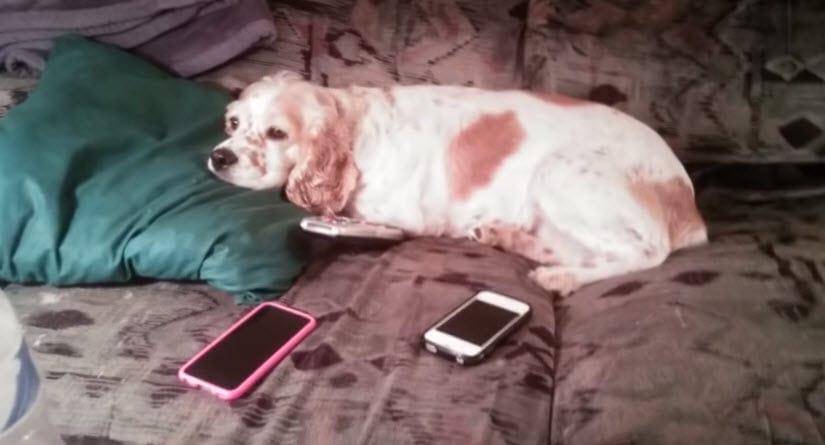 Jealous Dog Forgives Owner