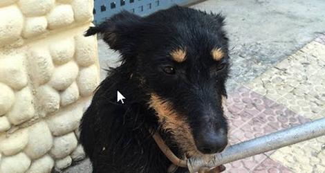 Parking Officer Saves Dog Locked Inside Vehicle's Trunk
