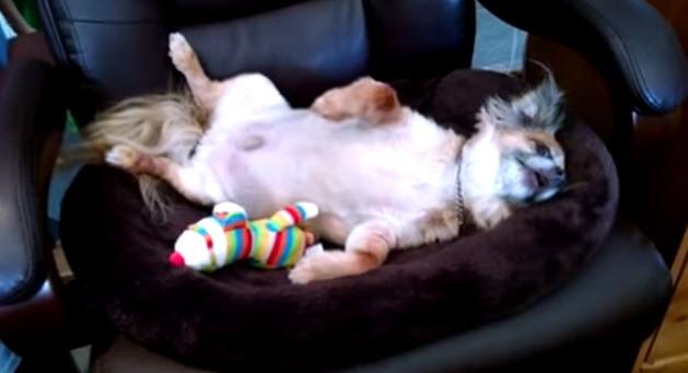 Lazy Dog Won't Get Off His Back