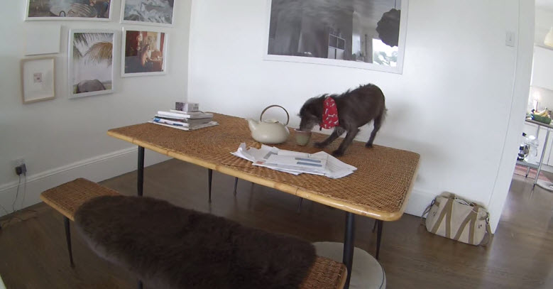 Hidden Camera Catches Dog Misbehaving