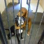 Photo Credit: Etowah County Humane Society
