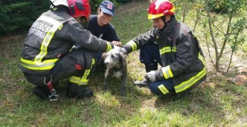 Firefighters Rescue Dog Trapped in 6 ft. High Wire Fence