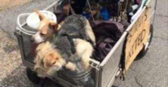 Animal Rescuers Help Man and 11 Dogs Travel Across the Nation