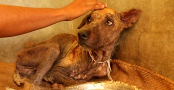 Watch How Love, Food and Care Help Change a Dog