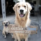 Your Dog Can Be the Star in Your Baby Announcements