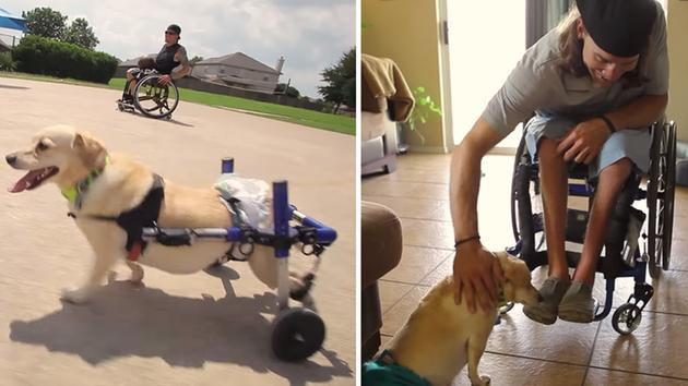 Dog in Wheelchair Becomes Besties With Man in Wheelchair