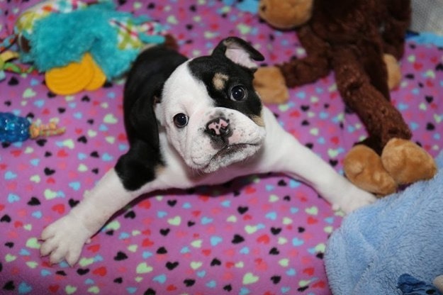Bonsai A Special Little Guy That S A Living Miracle Life With Dogs