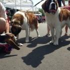 7.12.15 - worlds largest dog wash1