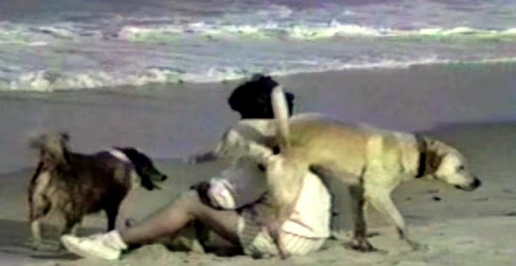 Dogs Having a Blast at the Beach