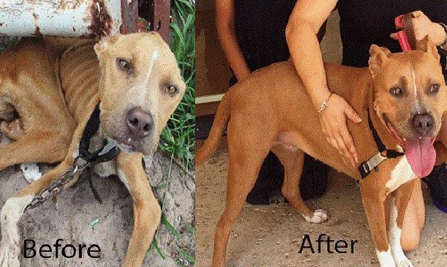 Adoptive Family Celebrates Dog Abuser's Conviction
