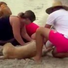 Heroic Bystanders Help Save Drowning Dog with CPR