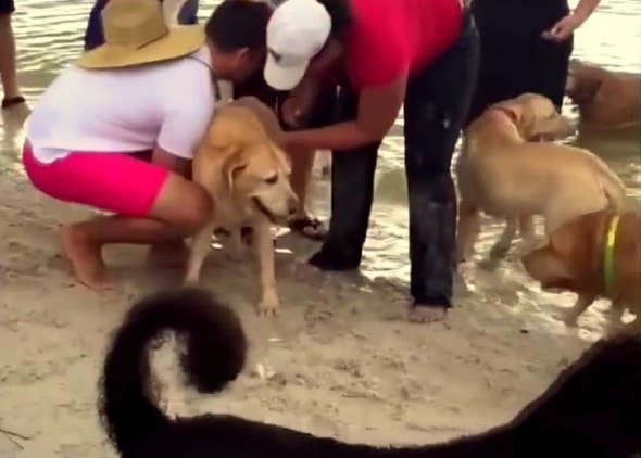 7.15.15 - Bystander Saves Drowning Dog with CPR3