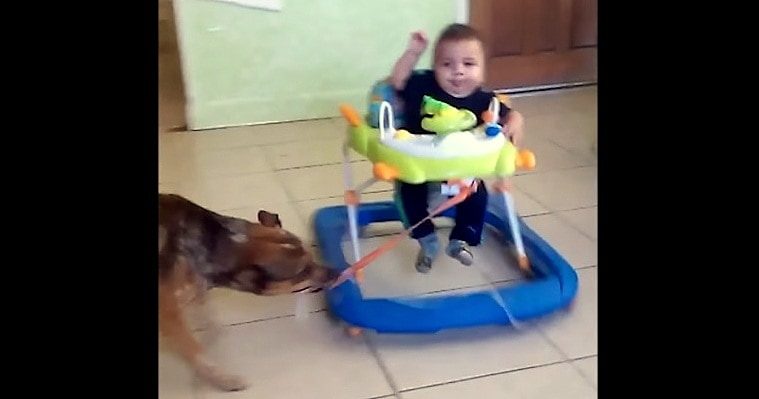 Dog Makes a Tilt-a-Whirl for Baby