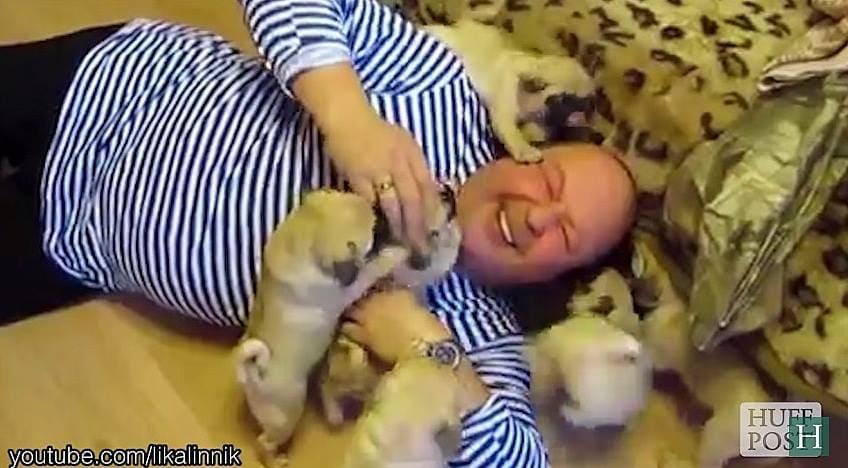 7.17.15 - puppy swarm