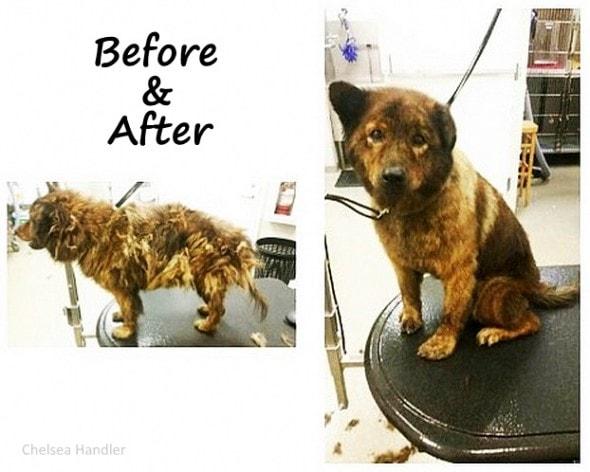 7.18.15 - Chelsea Handler Adopts New Dog1