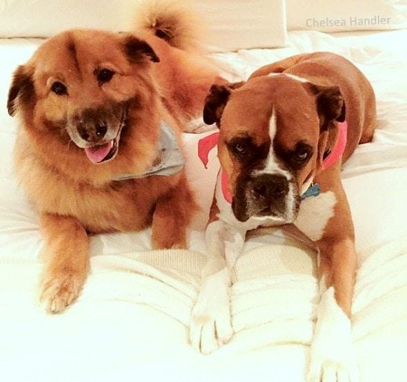 7.18.15 - Chelsea Handler Adopts New Dog3