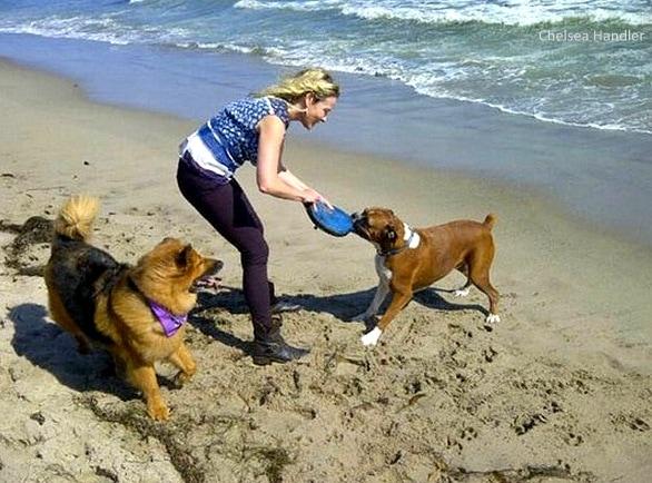 7.18.15 - Chelsea Handler Adopts New Dog5