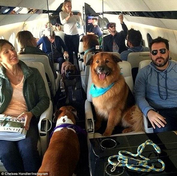 7.18.15 - Chelsea Handler Adopts New Dog6