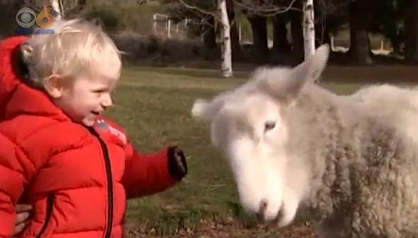 7.18.15 - Sheep Thinks He's a Dog4