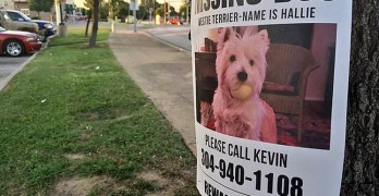 Family has Car Stolen with Dog Still Inside