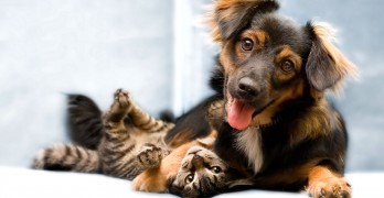 Spanish Town Grants Pets Equal Rights