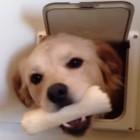 Dog Door Fails