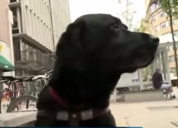 Uber Driver Refuses Blind Man and His Service Dog