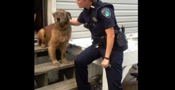 Police Officer Rescues Dog During Domestic Disturbance Call