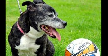 Soccer Ball-Sized Tumor Removed from Senior Dog
