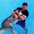 Hydrotherapy Gets Disabled Husky Back on His Paws