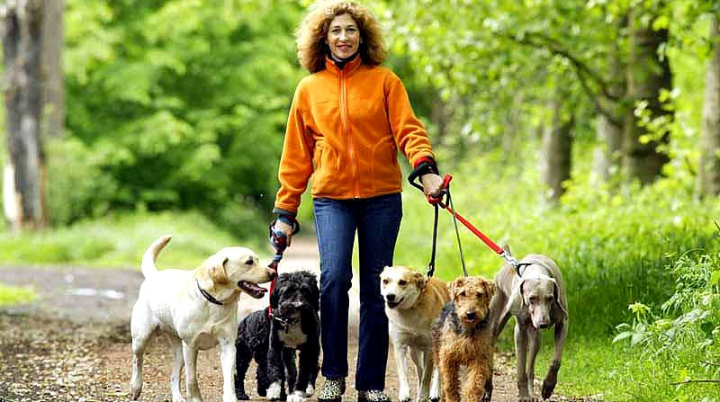 Wag! App Offers Unique Solution for Walking Your Dog - LIFE