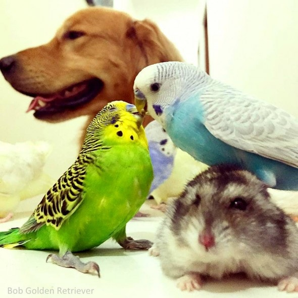 7.8.15 - Bob - Who Loves Birds & Hamsters13