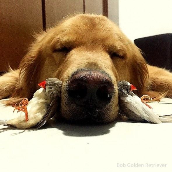 7.8.15 - Bob - Who Loves Birds & Hamsters18