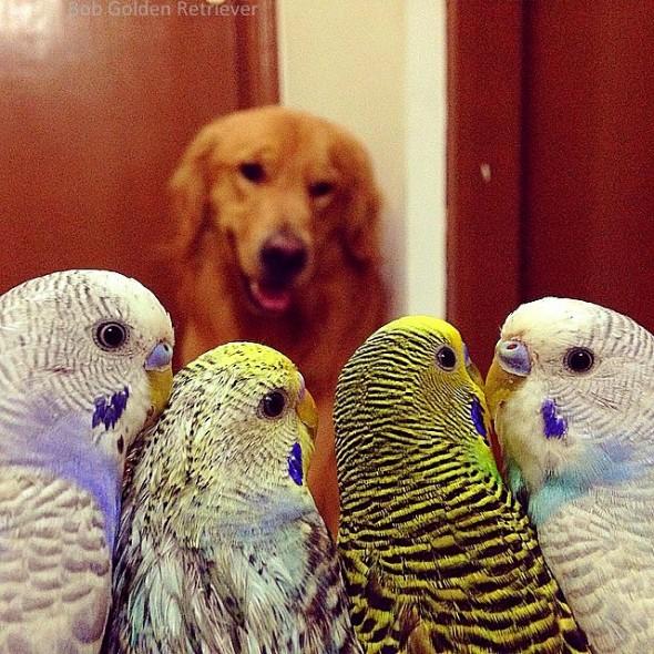 7.8.15 - Bob - Who Loves Birds & Hamsters19
