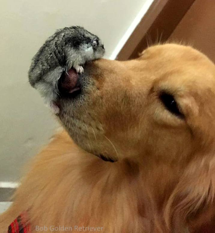 Hamstr And Dog Best Friends
