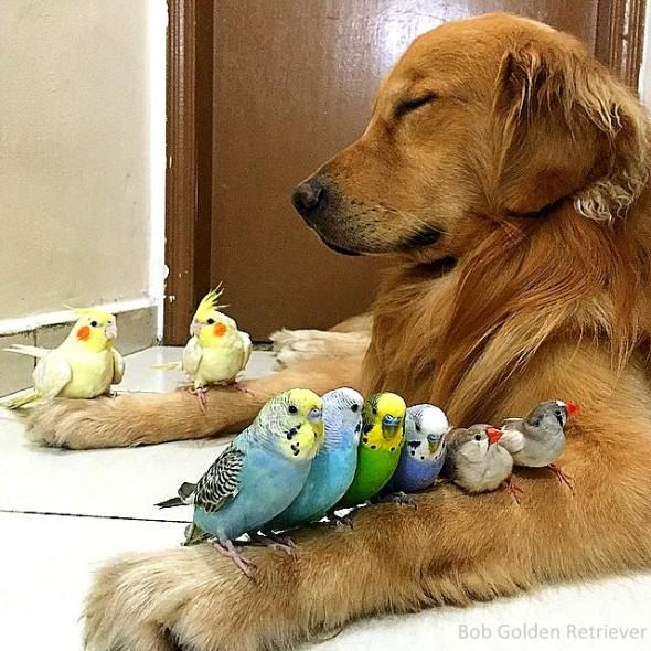 7.8.15 - Bob - Who Loves Birds & Hamsters20