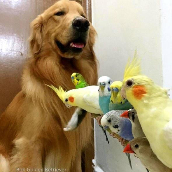 7.8.15 - Bob - Who Loves Birds & Hamsters3