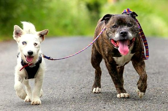 UPDATE: Blind Dog and Seeing Eye Buddy Adopted Together