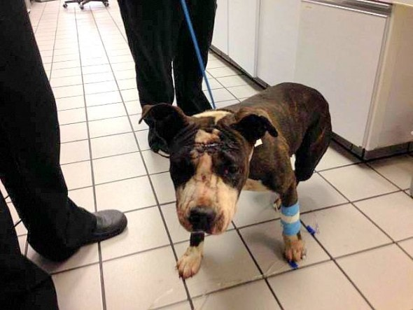 7.8.15 - Miracle Dog Survives Train Collision3