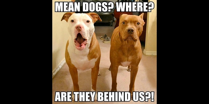 Roofus & Kilo:  The Dogs Behind the Photo