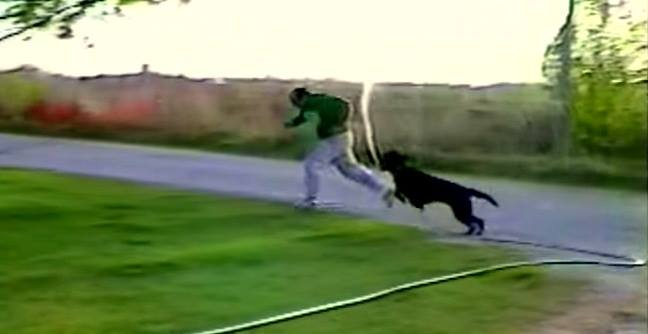 Dog Steals Garden Hose & Drenches Human
