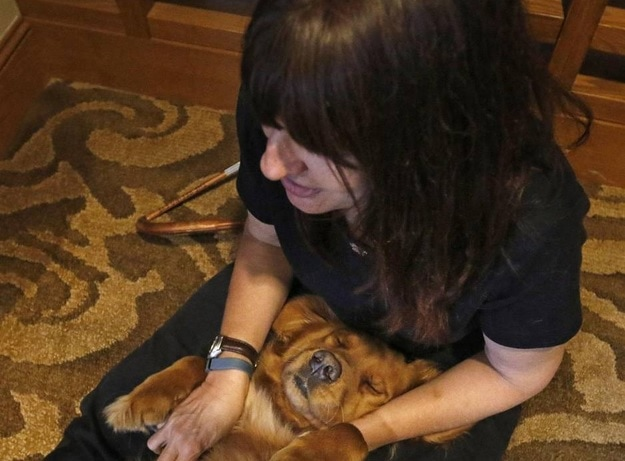Massage Therapy for Service/Therapy Dogs Helps
