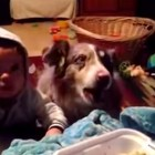 "Dog Says ""Mama"" Before Baby Can"