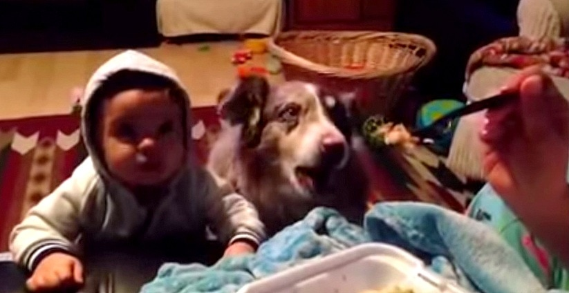 """Dog Says """"Mama"""" Before Baby Can"""