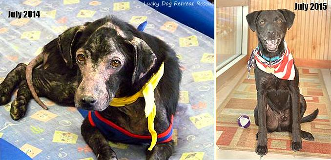 7.9.15 - Dog Who Is Allergic to People Gets Adopted0