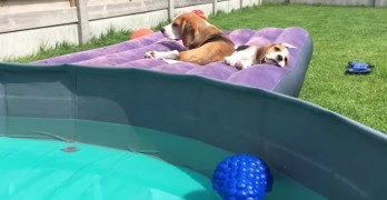 10 Tips to Keep Your Dog Cool in the Summer