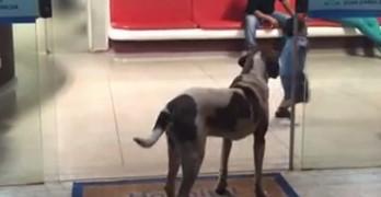 Loyal Dog Waits for Deceased Owner Outside Brazil's Hospital