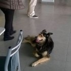 Abandoned Dog Finds New Family at Bus Station