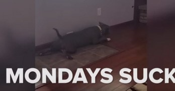 Funny: Dogs Having a Bad Day