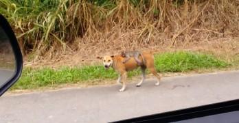 Stray Dog Adopts Orphan Monkey